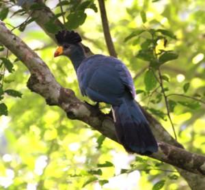 Uganda birding-11