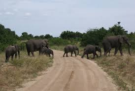 Kjongsafaris elephants (1)