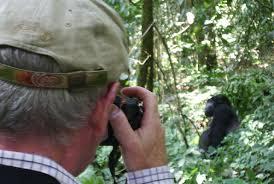 Kjongsafaris gorilla trek