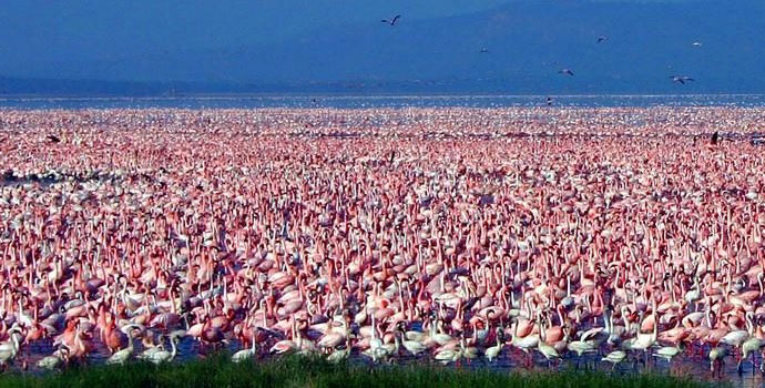Lake Nakuru Tours