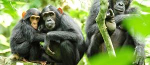 Uganda-national-parks-kibale-forest-national-park