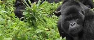 Uganda-national-parks-mgahinga-gorilla-national-park