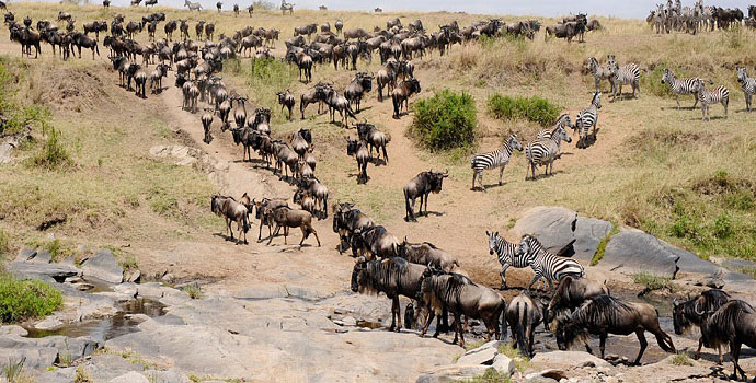 masai mara migration tours
