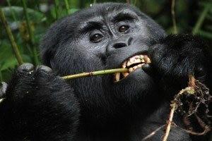 Kjong uganda safaris and tours1