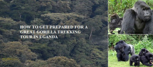 How-to-get-prepared-for-a-great-gorilla-trekking-tour-in-Uganda-(1)