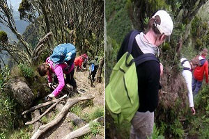 top 5 recommended activities to do in mgahinga gorilla national park3