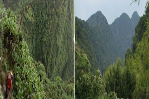 top recommended activities to do in mgahinga gorilla national park (1)