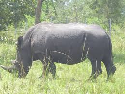 Kjongsafaris elephants (2)