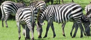 uganda national parks lake mburo national park