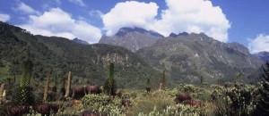 Uganda-national-parks-mountain-rwenzori-national-park