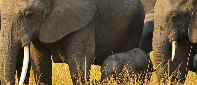 uganda national parks queen elizabeth national parks