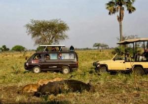 kjong safaris kidepo