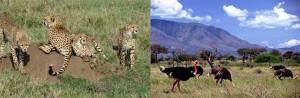 kjong ug safaris kidepo