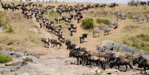 masai-mara-migration-tours