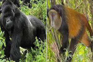 top 5 recommended activities to do in mgahinga gorilla national park