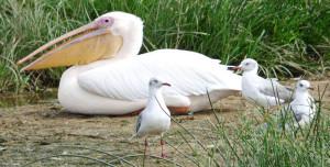 Birding spots in Uganda