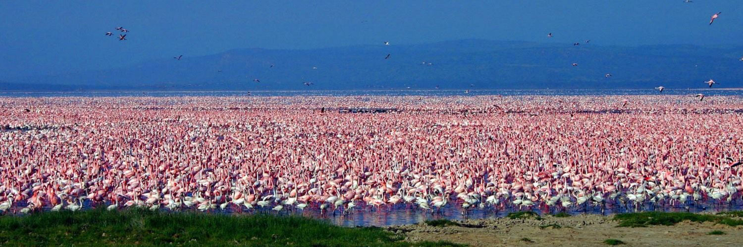 Tsavo east, Amboseli, Lake Nakuru and Masai Mara tour