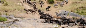 10 Days Masaai Mara Migration Safaris