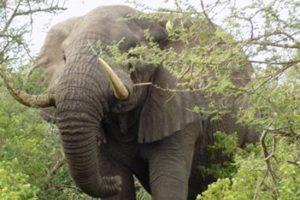 5 Days Kidepo and Murchison Falls Adventure