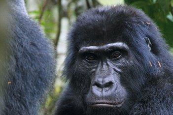 7 Days Gorilla Trekking and Semliki Park Adventure