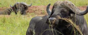 Kidepo fly option safaris
