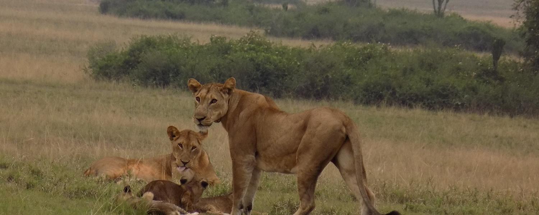 Uganda wildlife tours