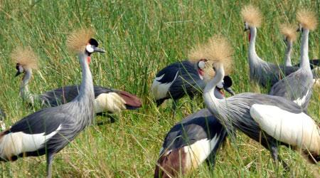 14 Days Birding Tour across Uganda Safaris