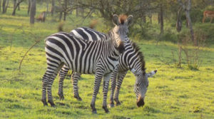 Uganda wildlife tours and safaris