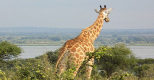 2 Days visiting Murchison falls