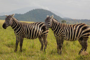 9 Days Holiday Safari in Uganda and Rwanda