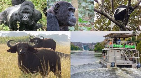 Luxury Tour Across Uganda