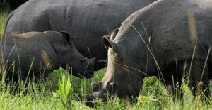 Ziwa Rhino Day tours