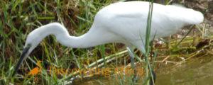 Birding in Semliki Valley NP