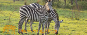 Lake Mburo National Park Safaris