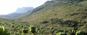 Mountain Elgon National Park Uganda
