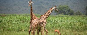 6 Day Rwanda Safaris | Rwanda Tours