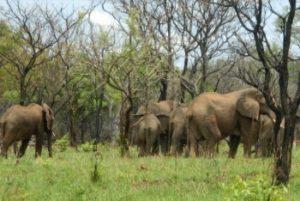 8 Days Uganda and Rwanda Safaris