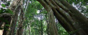 Budongo forest ecotourism