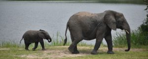 Elephants in Akagera National Park Rwanda
