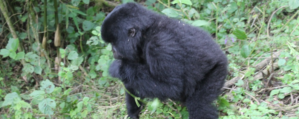 Visiting Bwindi Impenetrable National Park