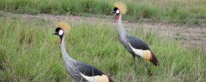 Visiting Lake Mburo National Park Birdlife