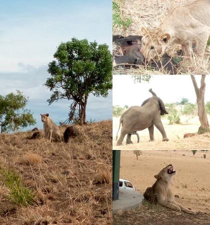 Kidepo Valley National Park Sighting