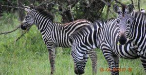 Lake Mburo National Park Day tours