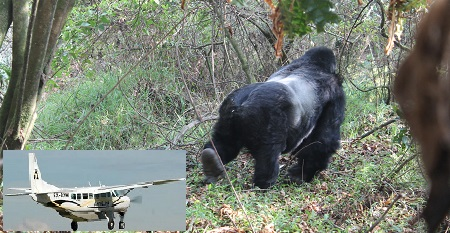 3 Days Gorilla trekking fly in safari