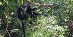 4 Days Rwanda budget safaris