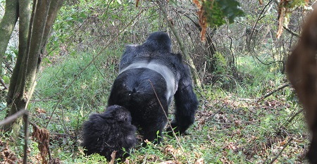 5 Days Gorilla Trekking and Wildlife safaris
