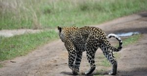 5 Days Kidepo Valley and Murchison falls tour | Uganda wildlife tours