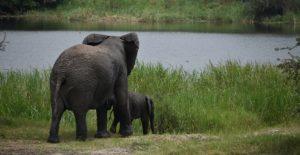 12 Days Rwanda wildlife tours