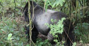 6 Days Rwanda primate safaris