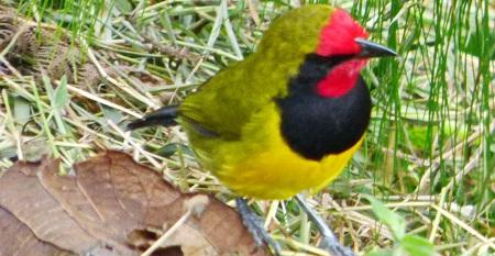 9 Days Bird watching safaris in Uganda   Uganda wildlife tours